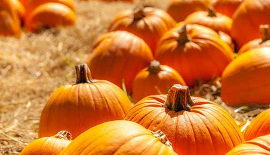 Oh My Gourd! It's National Pumpkin Day!